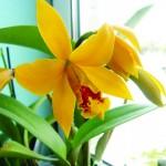 Kai namuose karaliauja orchidėjos