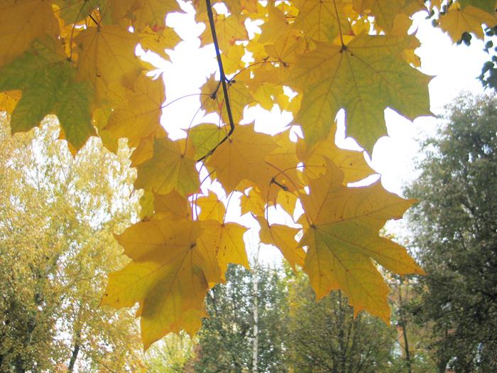 Rudens lygiadienis – ne vien krintančių lapų simfonija. Autorės nuotrauka.