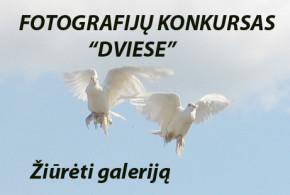 IMG_2233 copy1