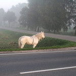 Kalvarija. Su penkiasdešimčia pilkų atspalvių ir su… baltu arkliu, pasitinkančiu prie Karališkojo parko