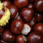 Kaštonų vaisiai: nauda sveikatai ir pavojai