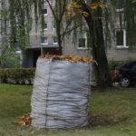 Kur dėti sugrėbtus lapus?