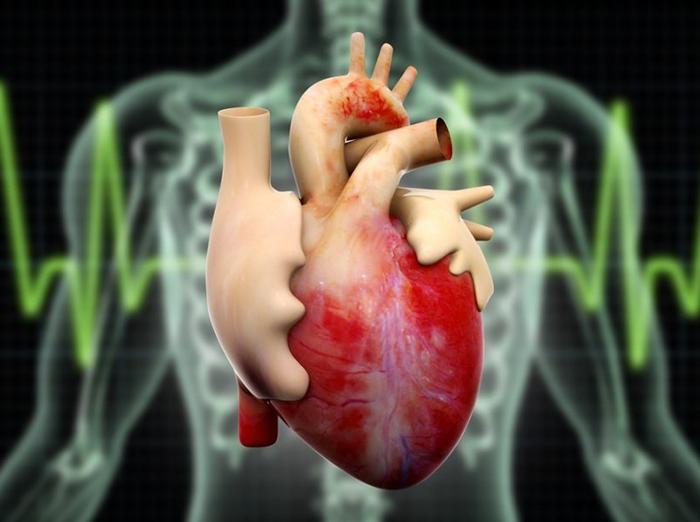 Kardiologės patarimai, kaip pagerinti kraujotaką ir išvengti infarkto