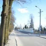 Bus kertami pavojų keliantys medžiai Marijampolės kapinėse
