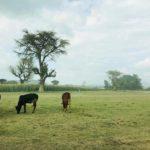 UNICEF misija Etiopijoje: antrosios dienos dienoraščiai