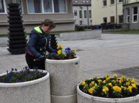 Marijampolės viešosios erdvės puošiasi pavasariniais žiedais!