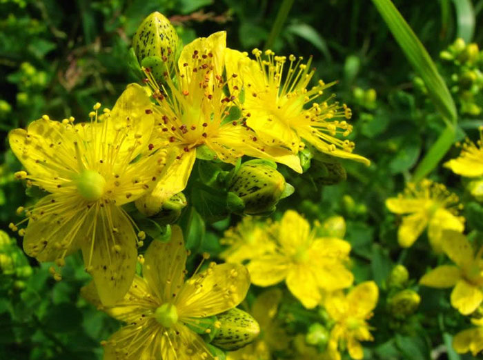 Apie homeopatiją: užsiimant savigyda galimos ir šalutinės reakcijos