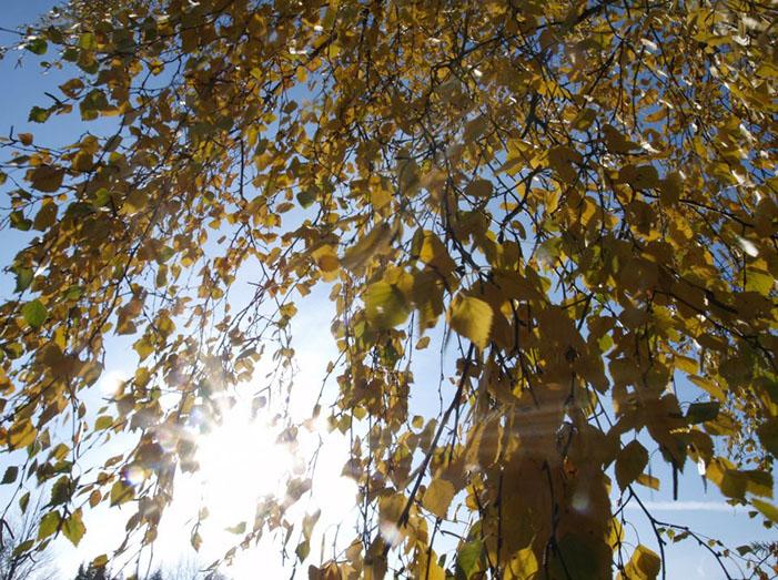 Pagreitėjęs gyvenimo tempas rugsėjį: susikaupti ir pagerinti atmintį padeda net paprasti įpročiai
