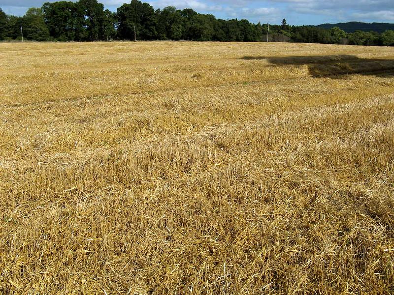 Kaip pagerinti dirvos derlingumą, naudojant bakterijas?