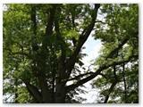 Parko uosis – botaninis gamtos paveldo objektas.