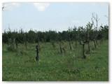 Tokiose salelės soduose, kur styro iššalę medžiai, bus atsodintos.