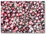 Šiemet trešnės ir vyšnios džiugino gražiu derliumi.