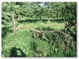 Apie 30 ha plotą užimantys sodai - trijų bičiulių gyvenimo azartas.