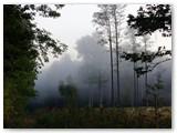 Medžių viršūnes gaubia rūkas.