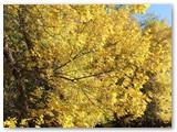 """Ritos fotografija: """"Geltonų lapų simfonija""""..."""