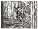 Su vienu iš jų trumpam susitikau miško brūzgynuose.