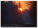 Saulėtekis miške. Kiek jų ten sutikta...