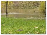 Ten, kur plaukioja antys ,buvo Šešupės krantas