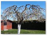 Velykų obelis tradiciškai laukia kitokių – karantininių – Velykų!
