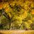 Trys eilėraščiai apie rudenį